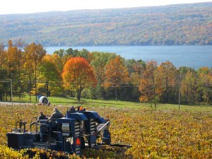 Finger Lakes country(Credit: Finger Lakes Distillery)