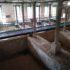 Buffalo Trace Bourbon Pompeii